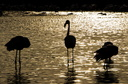 Contre-jour Flamants roses