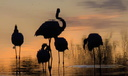 Contre-jour flamants